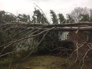 nassau county tree down from wind damage